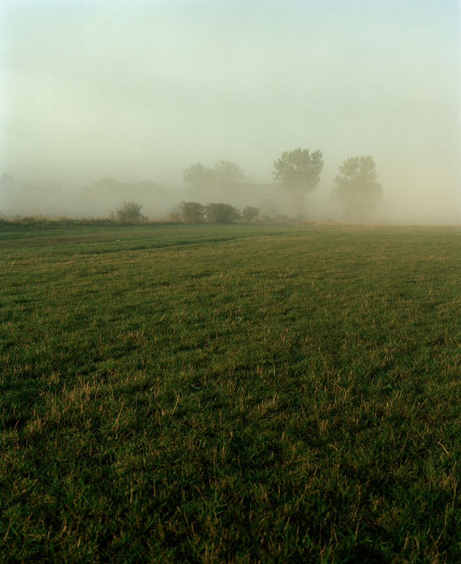 Foggy Grass Field